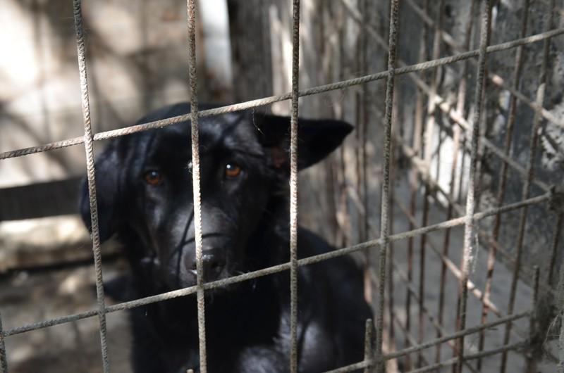 Aktuelles Second Hand Hunde In Not Hund Tierschutzverein